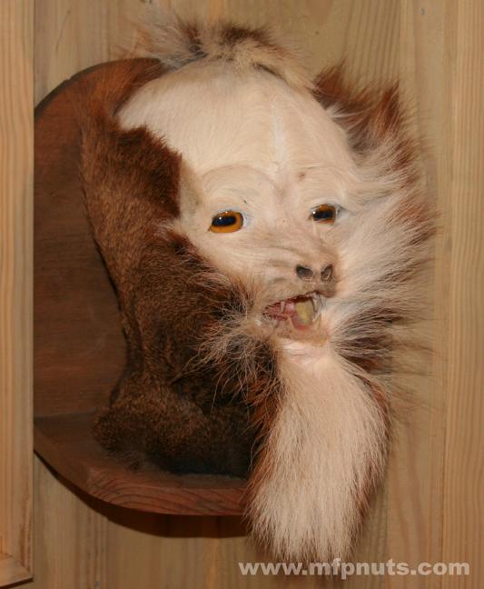 Albemarle Creeper